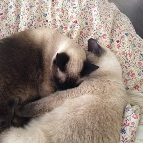 catsnuggle