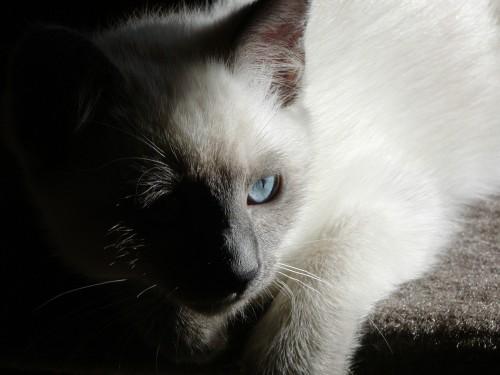 foof as a kitten