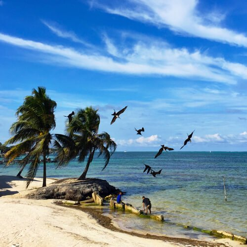 birdsswooping
