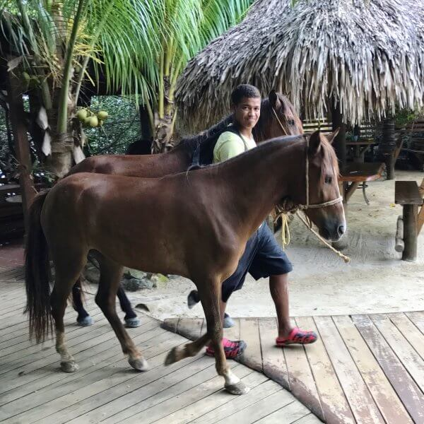 Horses on Little French Key Roatan